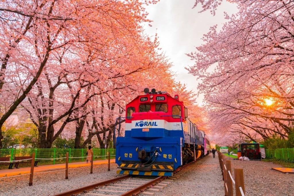 ทางรถไฟดอกซากุระคยองฮวา อยู่ที่ เคียงซัมนัมโด